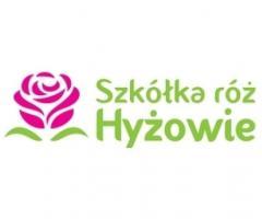 Hyzowie.com | Sadzonki róż ze szkółki róż